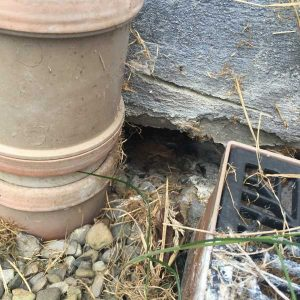 Hole under rear of house - perfect entrance for rats and other vermin to enter the house.